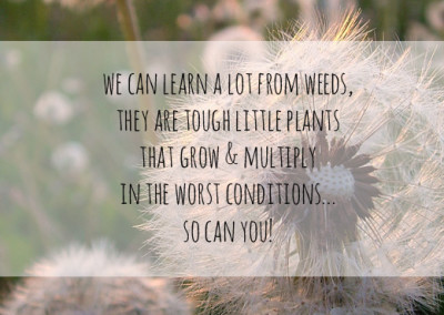 We could learn a lot from weekds, they are tough little plants that grow and multiply in the worst conditions. So can you!